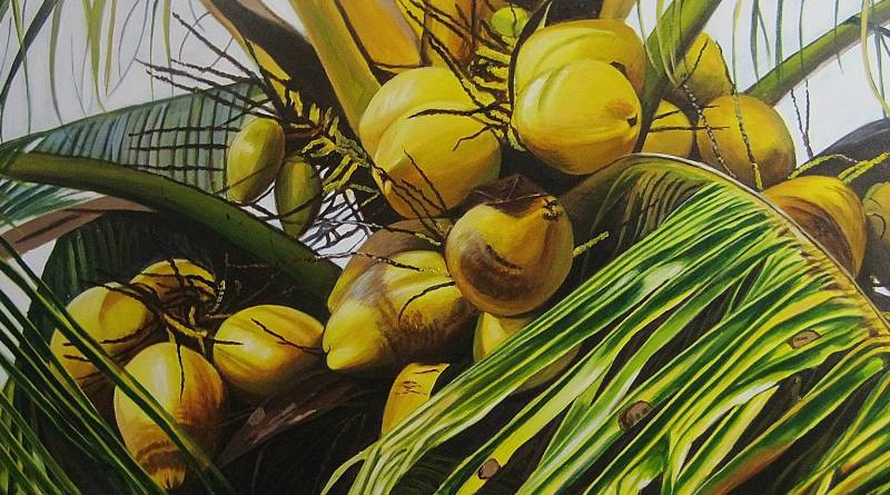 Painting illustration of coconuts