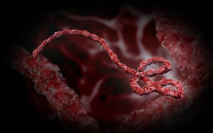 Ebola Africa Nigeria visitor in Jamaica