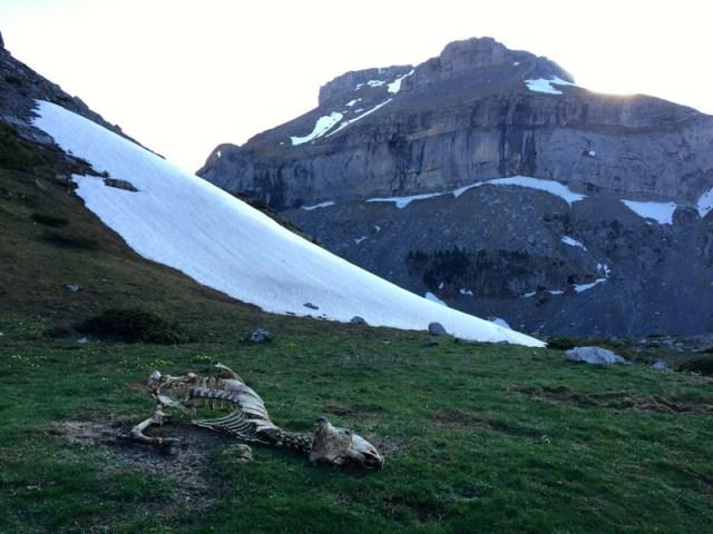 Algunos restos de ganado, que aparecen al retirarse la nieve