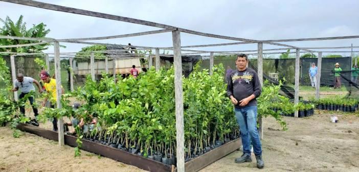 Prefeitura de Jacareacanga Recebeu Carregamento de Mudas de Arvores Frutíferas