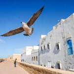 Essaouira (Essawira) – Maroko
