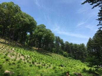 숲에서 배우다_Image 4