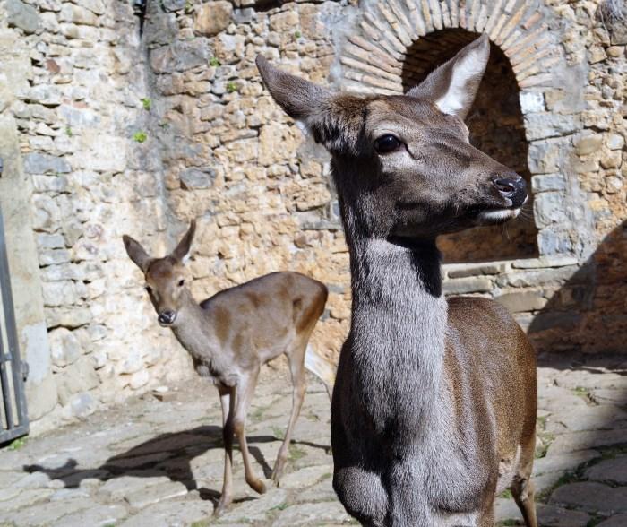 Ciudadela ciervos