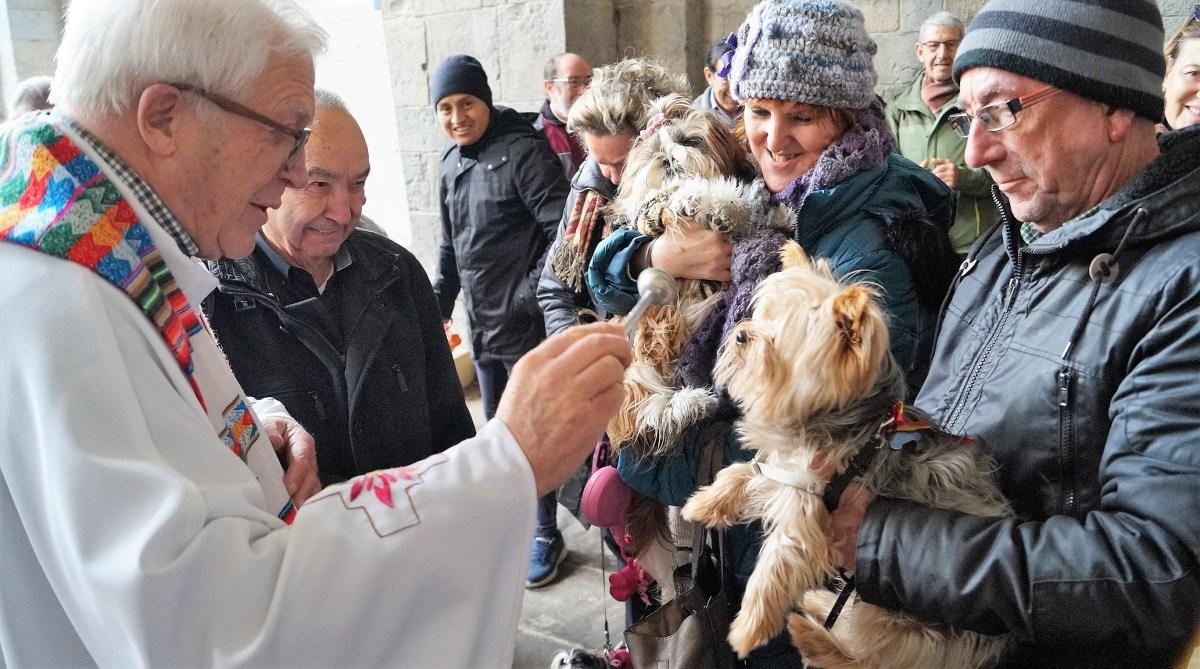 Jaca, fiel a la tradición de la bendición de animales por San Antón