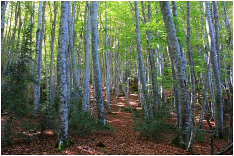 NATURALEZA. Bosque del Betato.