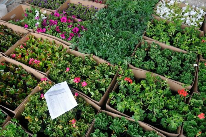 63.000 árboles y plantas de 108 especies llegarán a los pueblos con la campaña de la DPH. (FOTO: DPH)