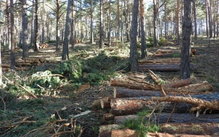Por primera vez, Aragón saca a subasta el aprovechamiento de madera en un monte de Borau. Imagen de archivo. (FOTO: Gobierno de Aragón)