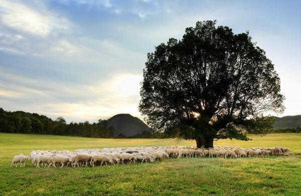 La Borda de Pastores, todo el sabor de la tierra a los pies de la Peña Oroel