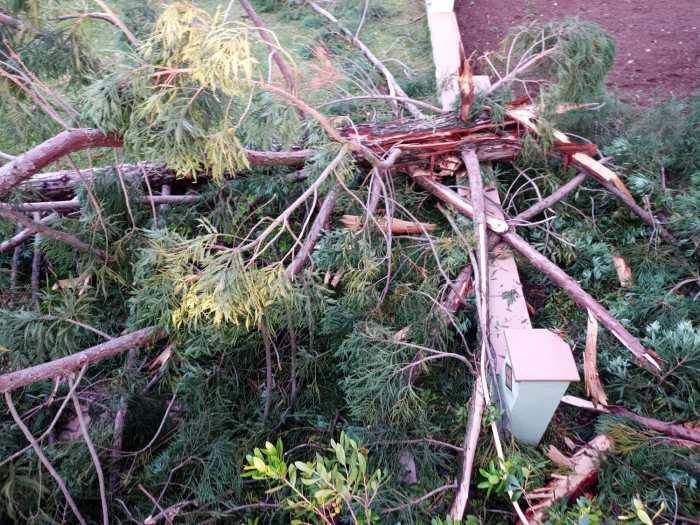 Un rayo derriba un árbol en la zona del Paseo de la Cantera de Jaca. (FOTO: DPH)