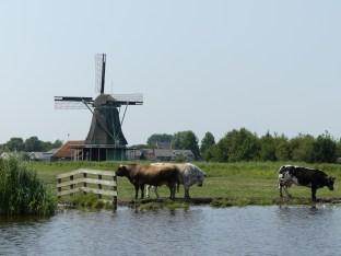 Holandische Polder
