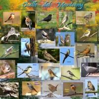 · Els ocells en el Parc Natural del Montseny