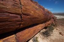 monumento_natural_bosques_petrificados2766
