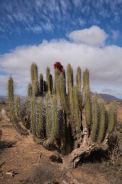 Piste_vers_Caleta_Chanaral_Del_Aceituno_Cactus