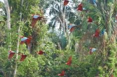 Vol dans la jungle