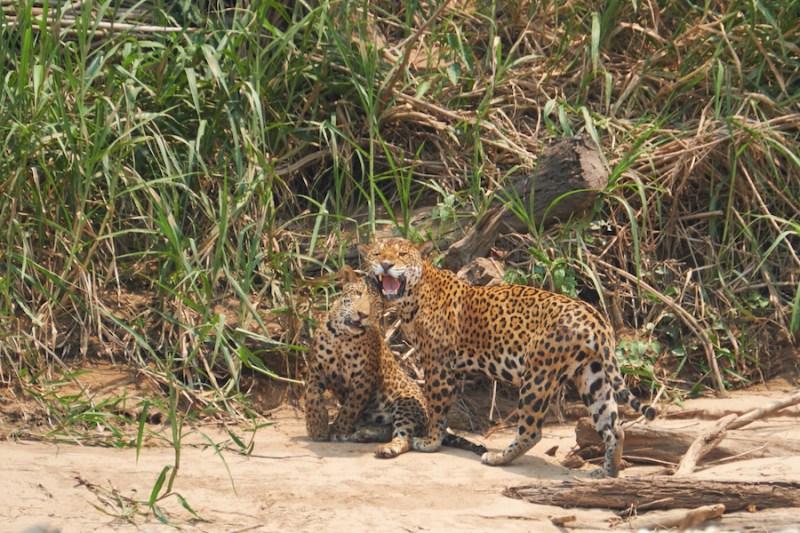 Du Pantanal, au Brésil, au Machu Picchu, au Pérou