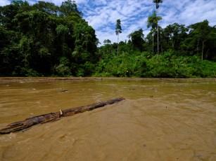Des arbres nous bouchent la remontée du rio