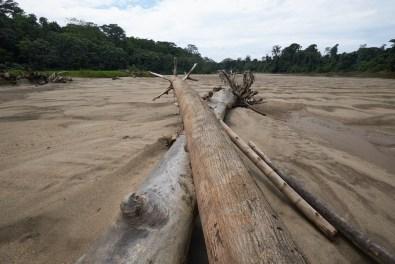 Arbres déplacés par le rio en furie