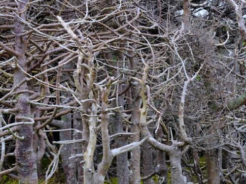Enchevêtrement d'arbre sur Langlade