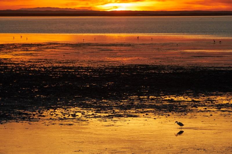 Oiseaux, mer, cactus et soleil en Basse Californie au Mexique