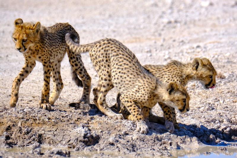 Des zones sauvages du nord au parc d'Etosha en Namibie