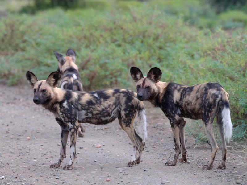 Du Kalahari au Parc Kruger en Afrique du Sud