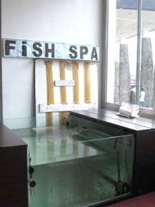 Fish spa in Puncak
