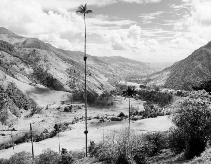 Valle de Cocora