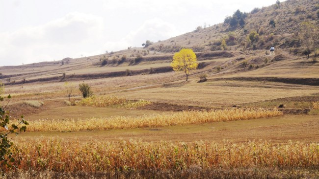 The road to Sapara
