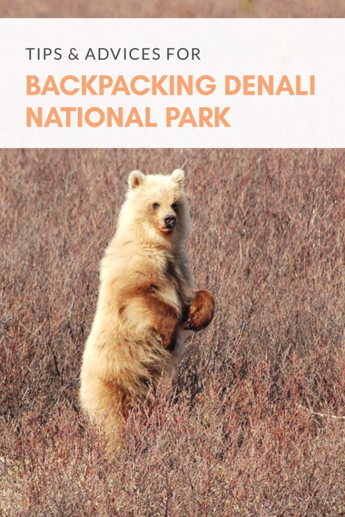 Tips and Advices for Backpacking in Denali National Park