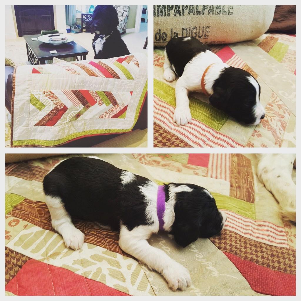 Ruby & Winston's Puppy Quilt