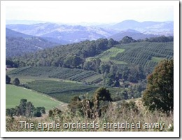 The apple orchards stretched away