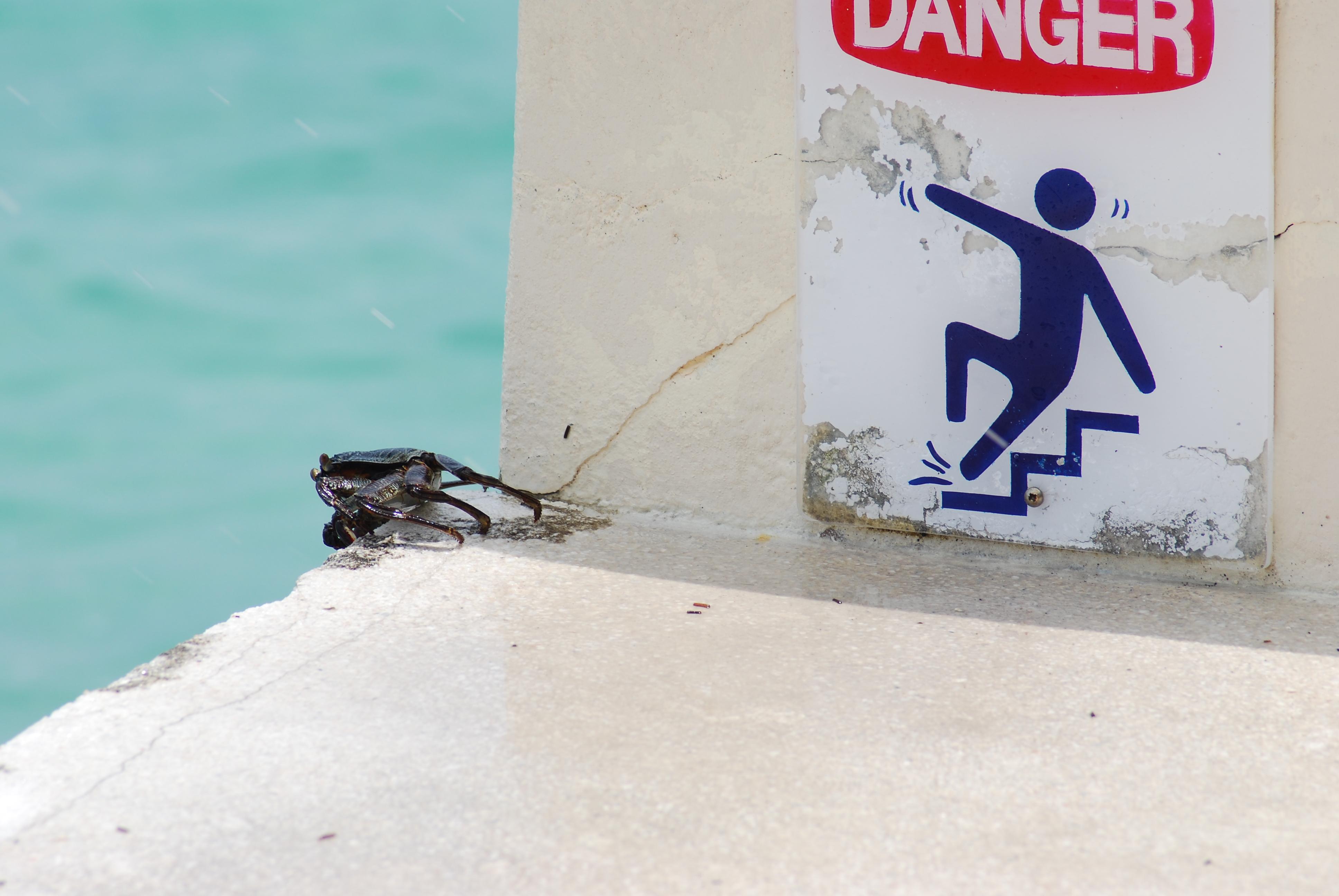 Krabbe in Gefahr
