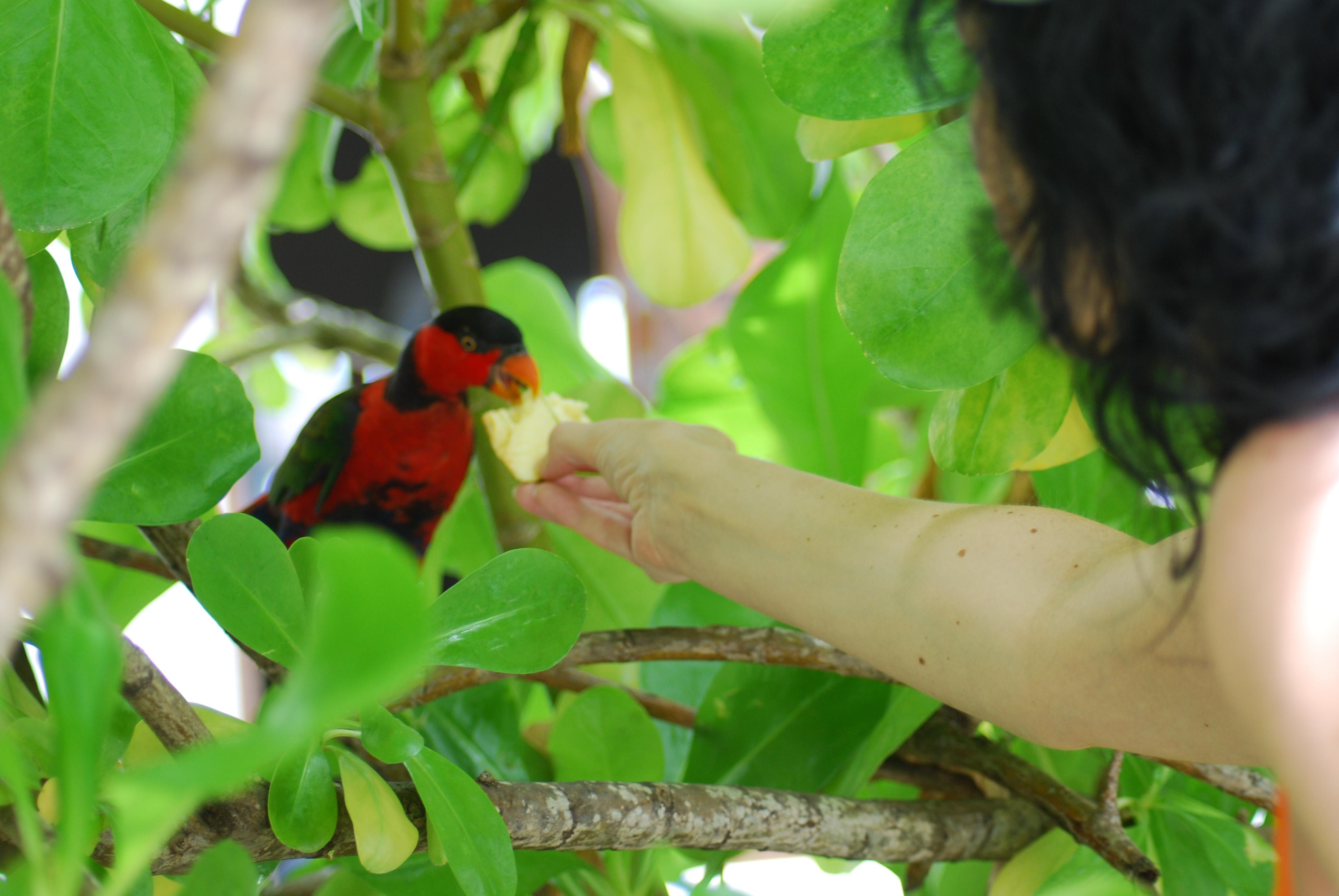 Papagei wird gefüttert