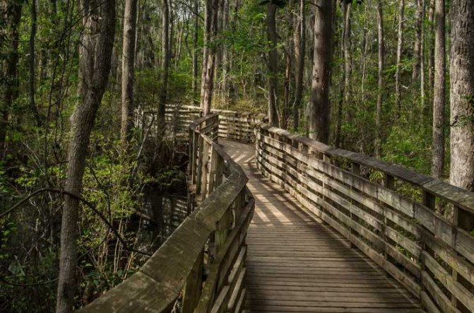 First Landing State Park Trail