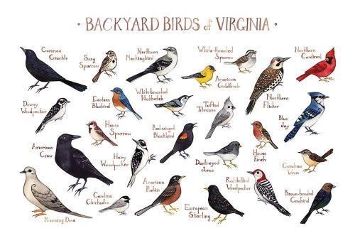 Backyard Birds of Virginia