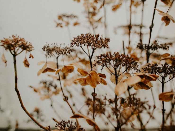 Fall Garden Care