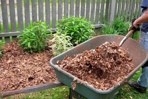 Spread Fallen Leaves in Garden Bed
