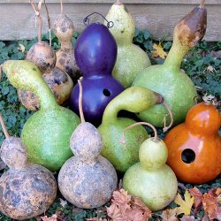 painted and dried birdhouse gourds