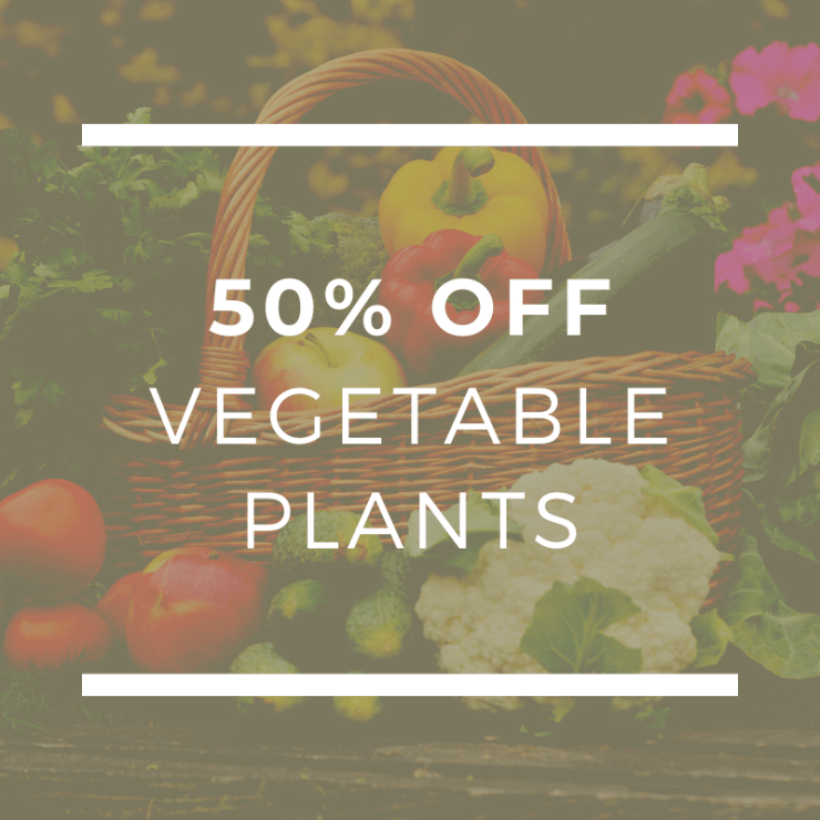 50% Off Vegetable Plants