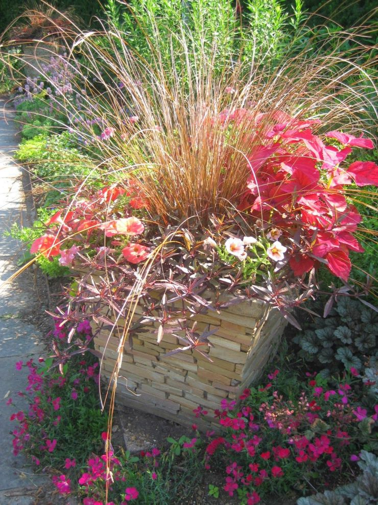 Carex red Rooster - Ornamental Grasses for Fall