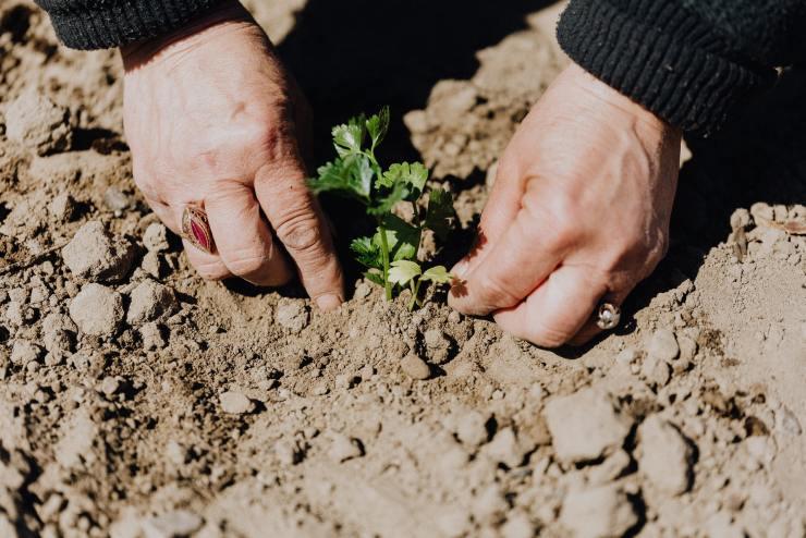 planting your vegetable garden