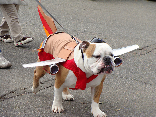 southwest-dog