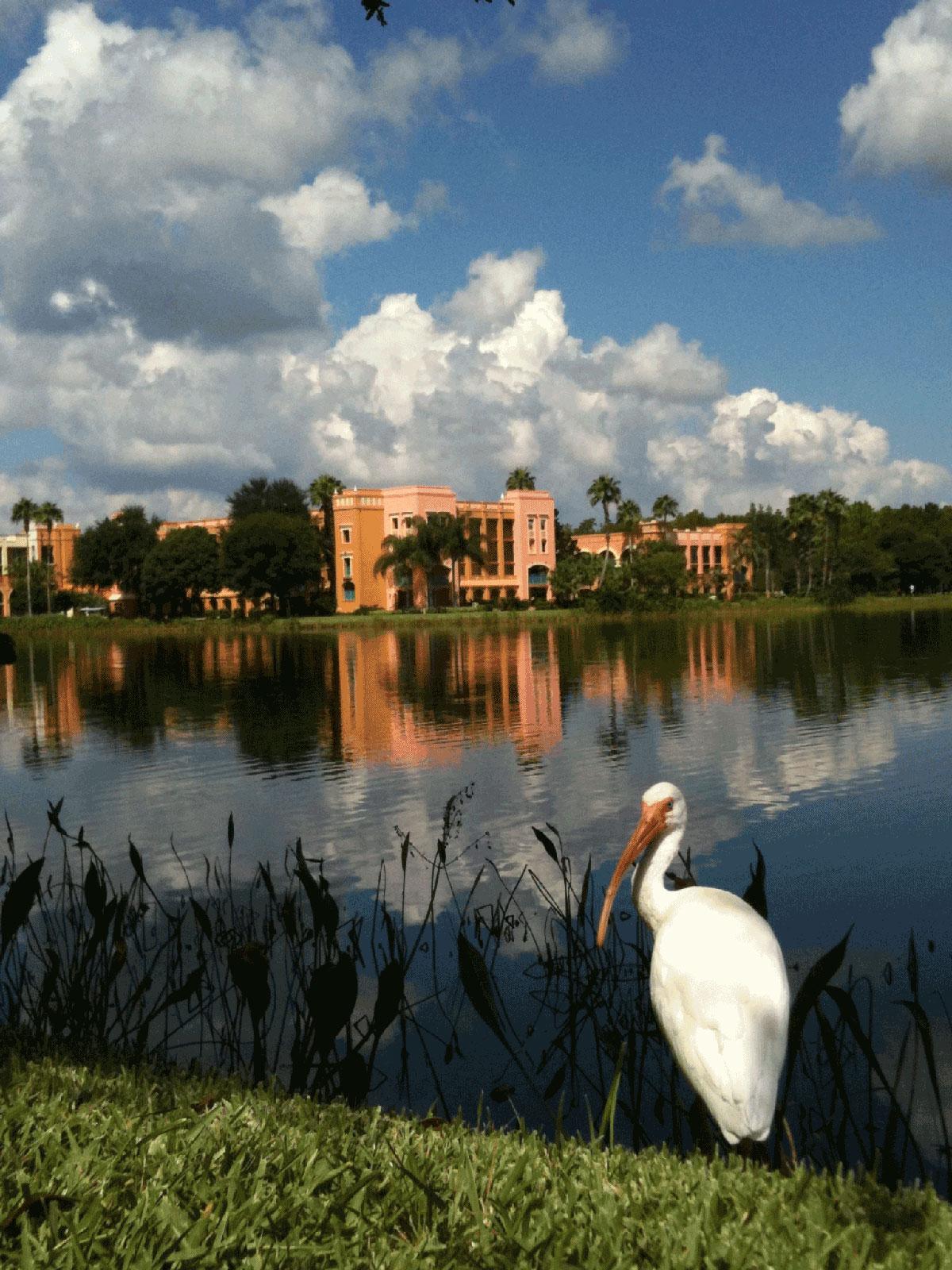 Bird at Coronado Resort, Disney World