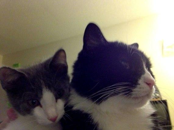 Merlin and his big brother Loki