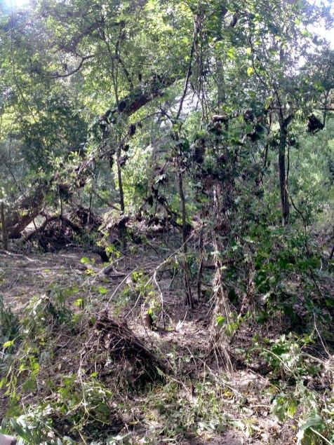 tangle of life and flood debris