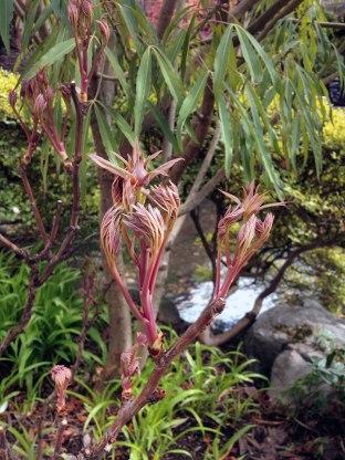 chinese-gardens16