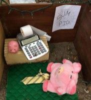Accountant P.i.G.