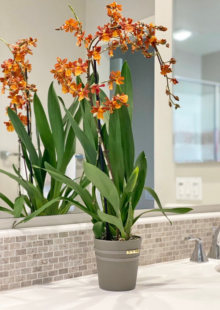 Orchid Pot in Bath Home Staging