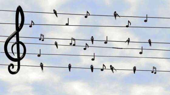De toon bepaalt de muziek