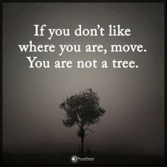 tree-move